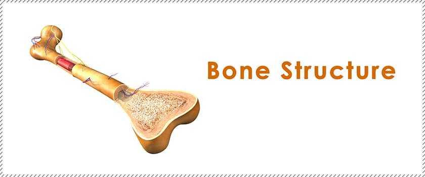 Bonemarrow Innerbanner